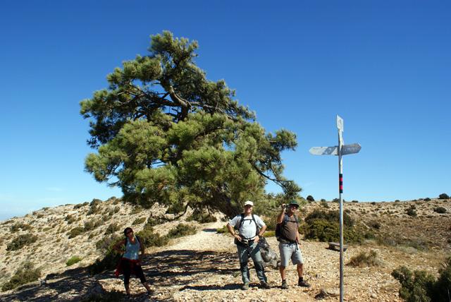 El Pi del Cugat, un heroi vegetal resistint a la Serra Major.