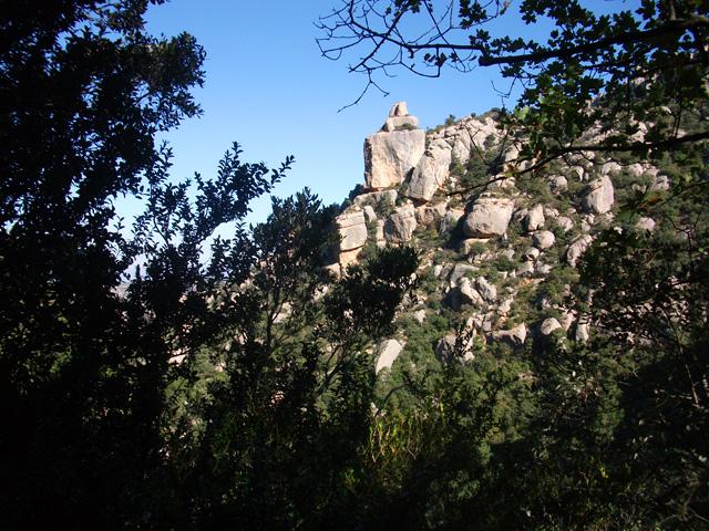 La Bitlla, vista des de la clariana al mig del bosc.