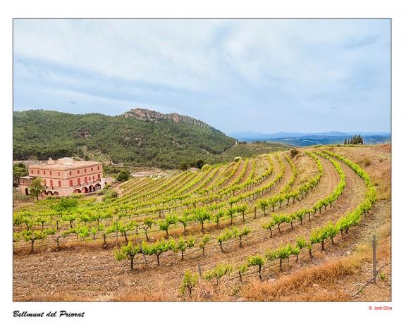 Bellmunt del Priorat. Foto: Jordi Oliva